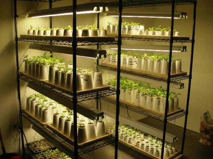 Grow Light Setup Seedlings Indoors Aquaponics Indoor Farming