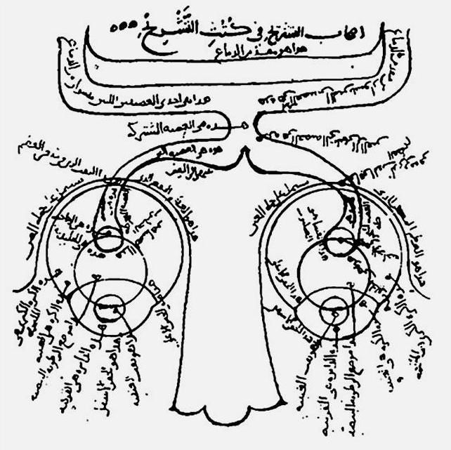 Diagrama sobre la anatomía del ojo del \