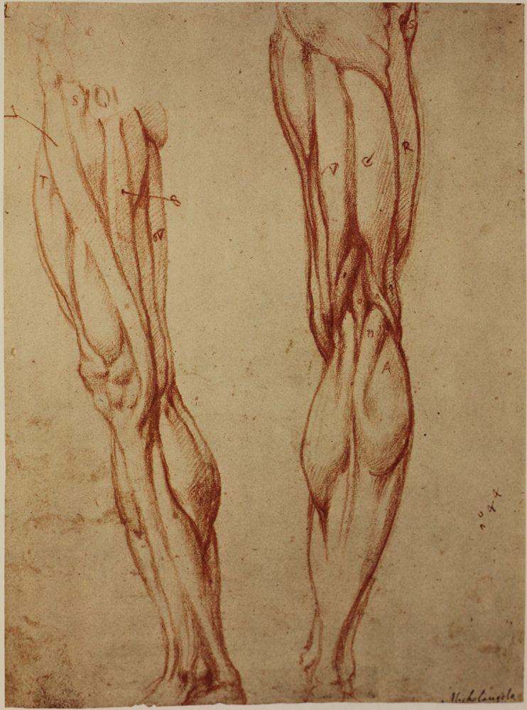 The Classical Pulse: Michelangelo: Anatomy Studies | çizim ...