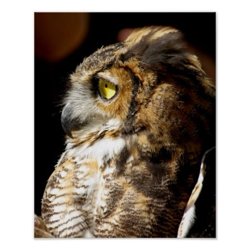 Great Horned Owl Profile Poster