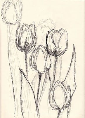 tulip sketch things i love pinterest sketches drawings and