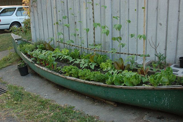 Amazing reuse of an old canoe as a raised bed.