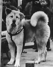 Hachiko Man S True Best Friend Akita Dog Japanese Dogs Dog Movies