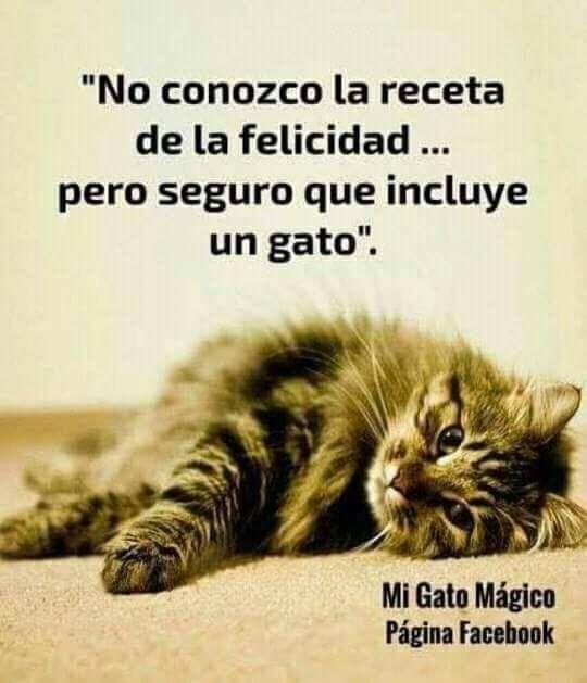 Es Ver A Mi Gatita Puma Es Adorable Gatos Gatos