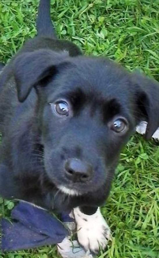 Adopt Ava On Pets Animals Dogs
