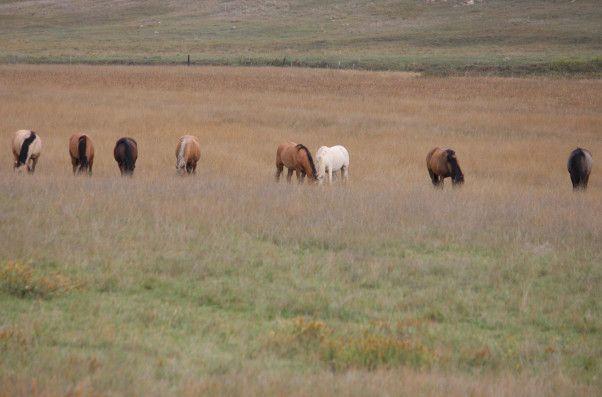 Pagephoto246697 horse, Beautiful horses, Horses