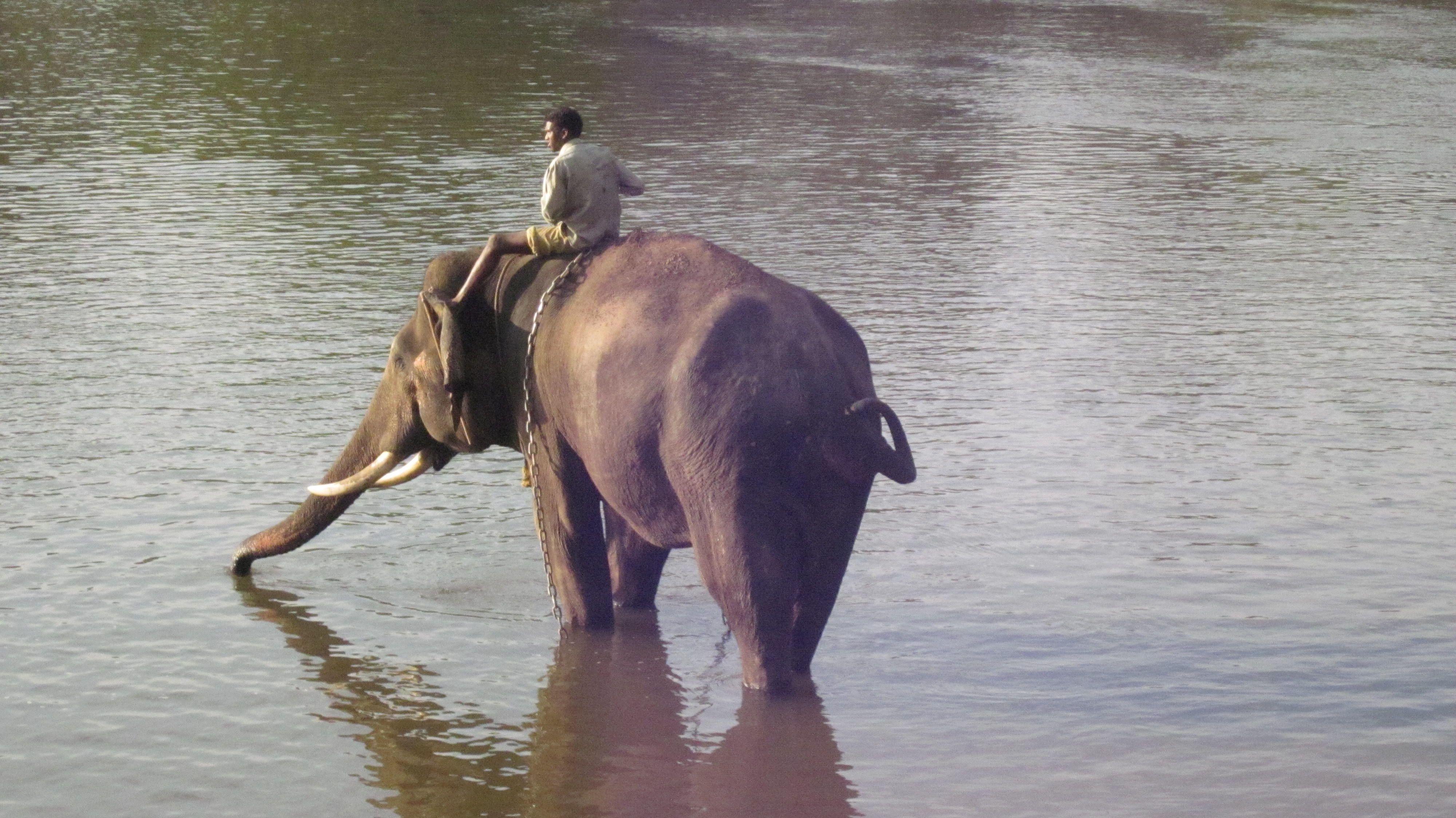 Walrus by Nad Koriba on India India, Animals