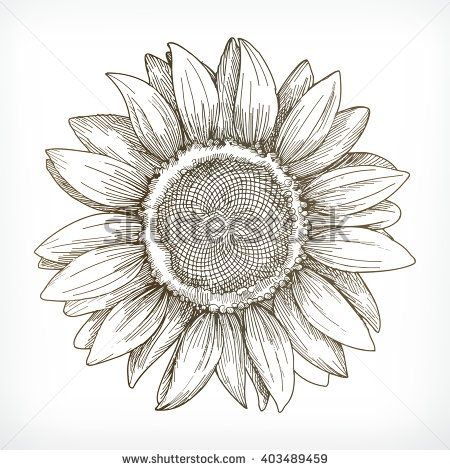 Kvetiny Rostliny Kresba Ilustrace A Kresby Shutterstock Kytky