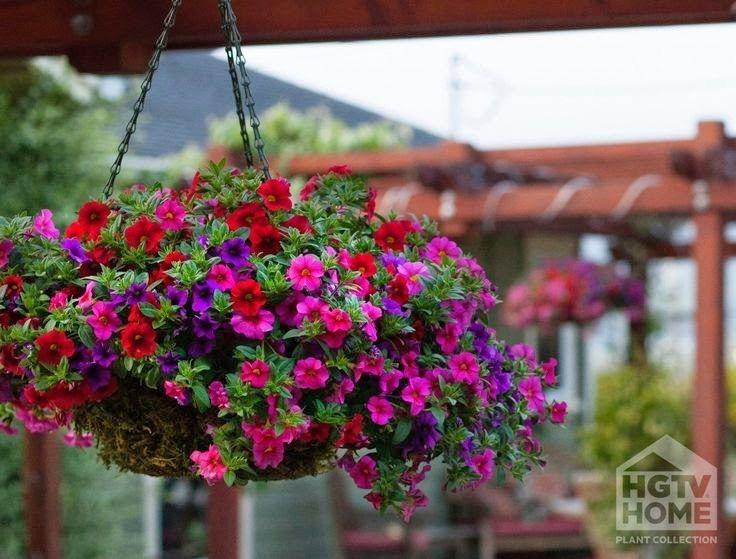 Hanging Flower Basket Inspiration Hanging Plants Outdoor Hanging Flower Baskets Plants