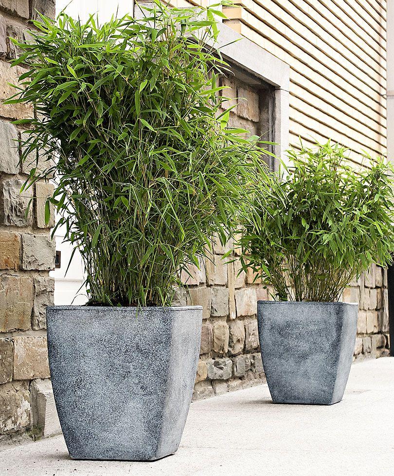Bambus 'Boo' Planter Bakker Haus und garten