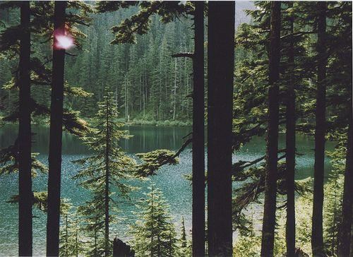 Resultado de imagem para florestas tumblr