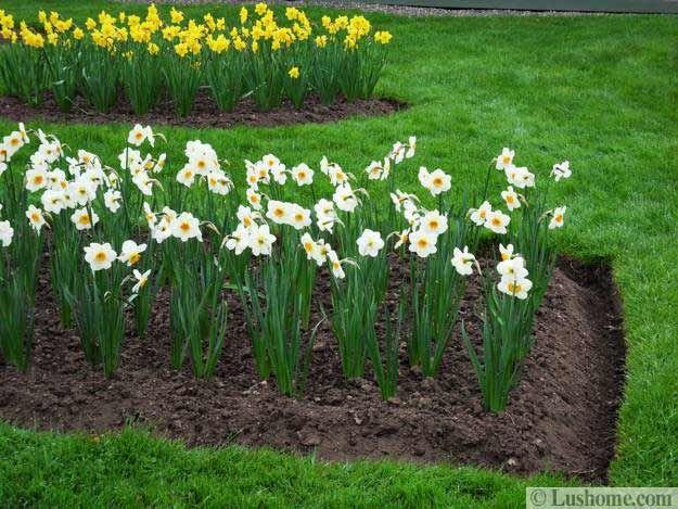 Spring Garden Design 25 Spring Flower Beds And Yard 400 x 300