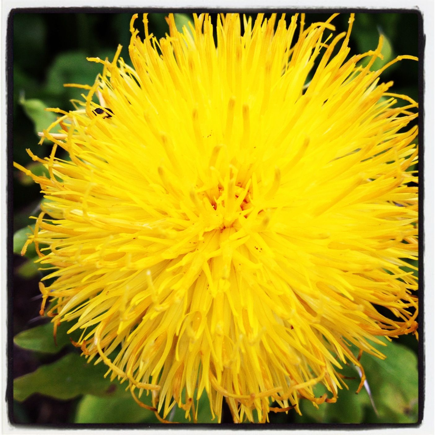 A yellow thing   Flowers   Pinterest   Yellow things and ...