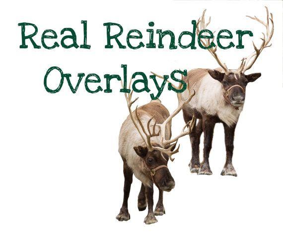 10 Reindeer Digital Overlays PNG Bundle