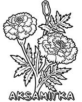 Darmowe Kolorowanki Kwiaty Do Wydruku Flower Coloring Pages Flower Drawing Coloring Books