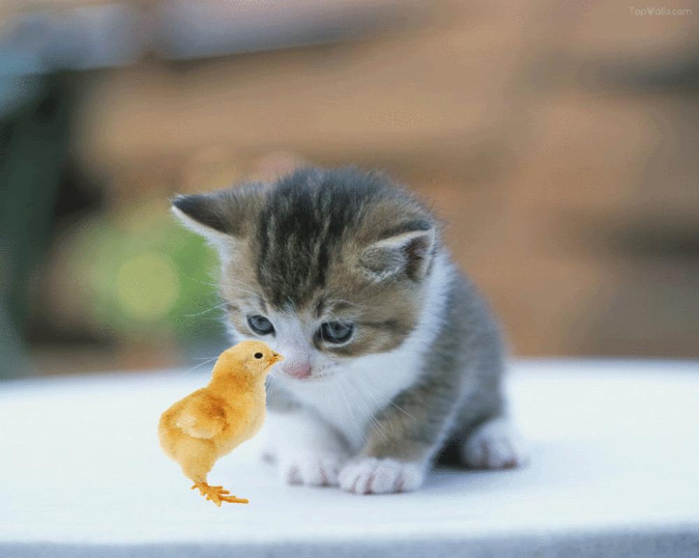 Gambar Kucing Lucu GambarGambar Keren