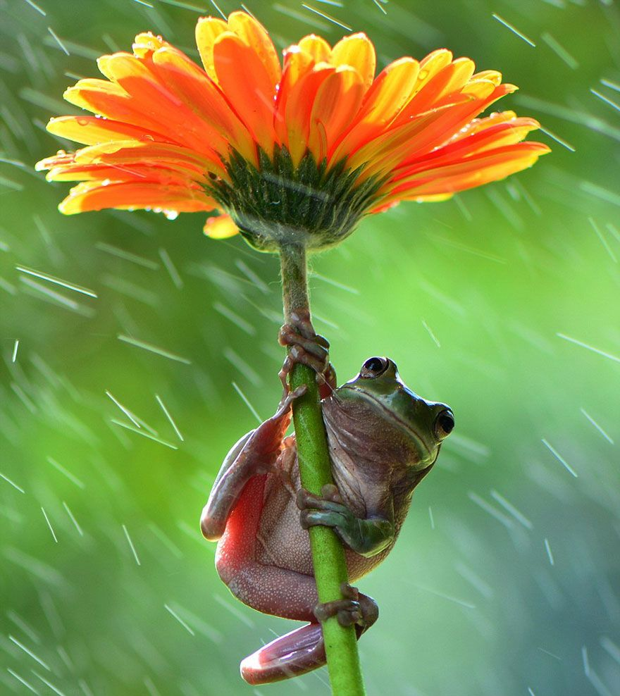 23 Animals With Natural Umbrellas Animals beautiful