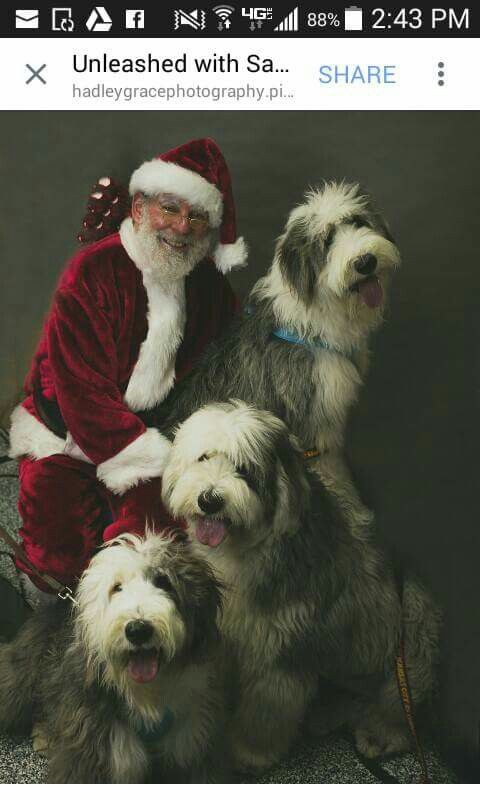 Pin On Bearded Collie For Ever
