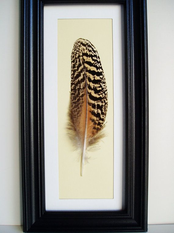 framed feather i could do this with my pheasant feather
