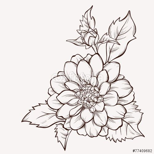 Vector Dahlia Flower Isolated On White Background Stock Image And Royalty Free Vector Files On Fotolia Dahlia Flower Tattoos Flower Drawing Vector Flowers