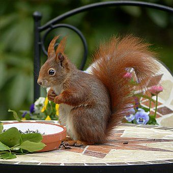squirrel animal rodent ภาพ