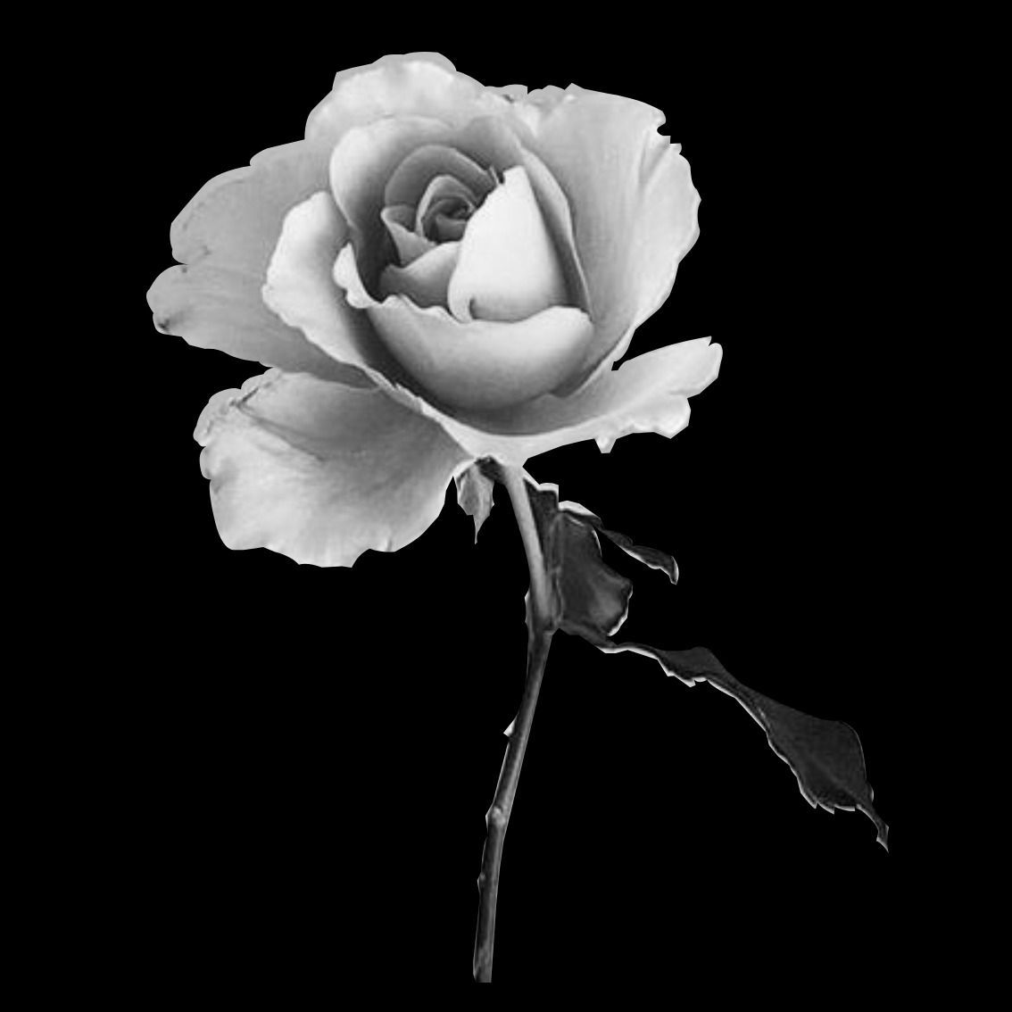 Black And White Flower Flowers And Landscapes Paintings