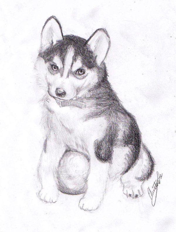 нарисовать рисунок собаки хаски историческом