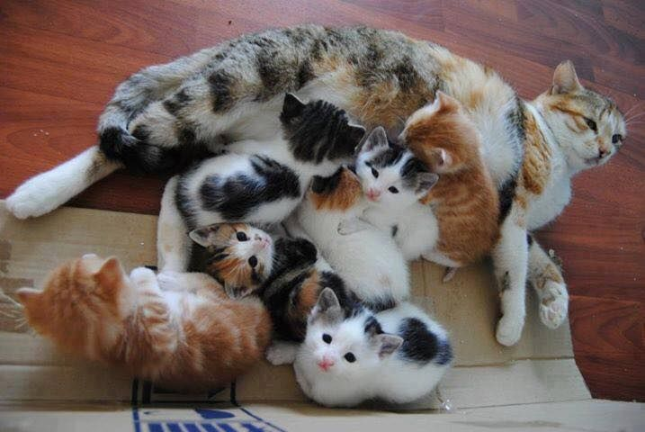 54 Cats Pictures