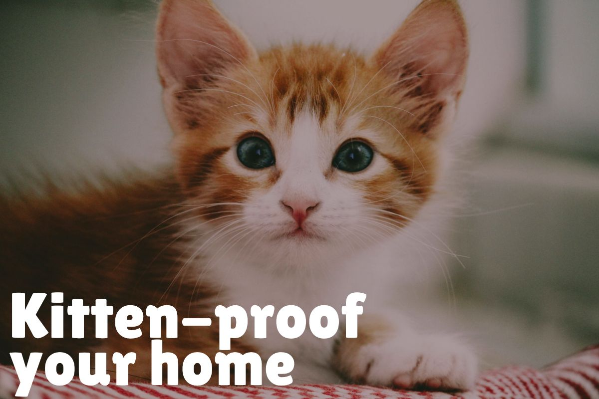 Top 10 New Kitten Care Tips You Need To Know Catvills In 2020 Kitten Care Cat Names Cats