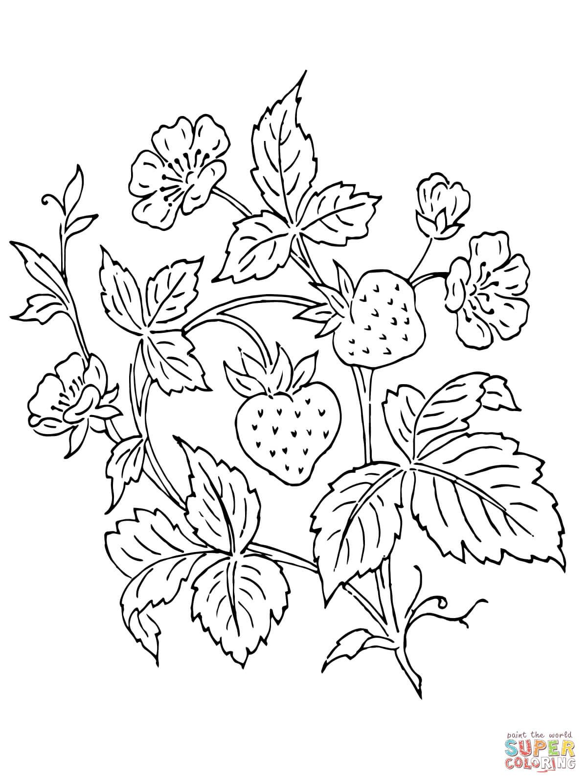 Strawberry Bush Super Coloring Free printable coloring
