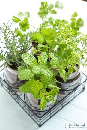 DIY Mason Jar Herb Garden by craftsunleashed via grow-vegetable #Gardens #Indoor #Herbs #Mason_Jar