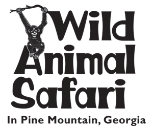 Wild Animal Safari In Pine Mountain Ga Get There 30 Minutes Before They Open Rent The Large Van And Animals Wild Wild Animal Park Pine Mountain Georgia