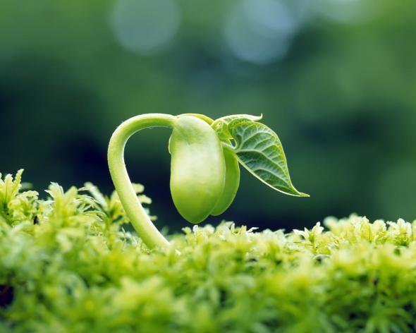 Harvesting Your Seeds Vegetable Seed Saving Handbook Germinacao De Sementes Plantas Cultivo De Plantas