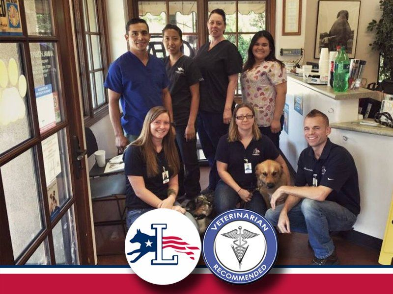 Camelback Animal Hospital Lorenzo S Dog Training Team Our