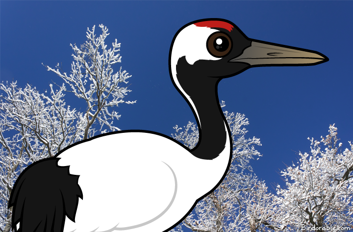 Species Profile Red Crowned Crane Crane Drawings Species Download a free preview or high quality adobe illustrator ai, eps, pdf and high resolution jpeg versions. pinterest