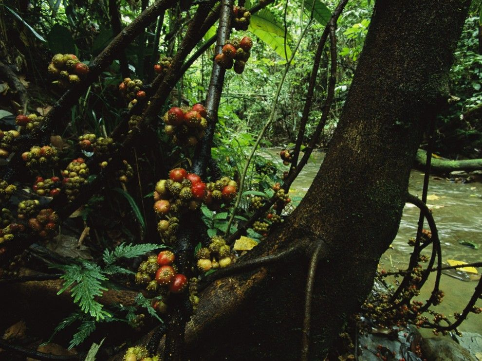 Habitats -- Tropical Rain Forest Pictures, Wallpapers, Downloads -- National Geographic