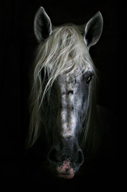 irene-sekulic   ........ horse