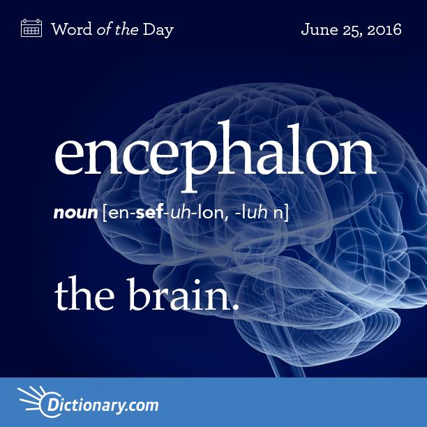 Encephalon Anatomy The Brain Origin Encephalon Is A New Latin