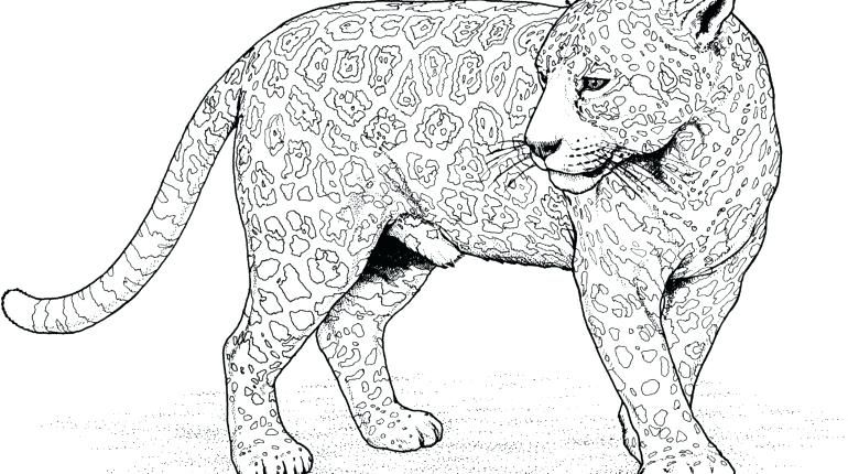 Wild Cat Coloring Pages A1930 Big Cats Coloring Pages Coloring