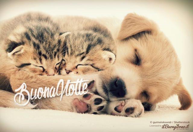 Augura la buonanotte con questa tenerissima immagine di due cuccioli di  gatto e cane! Chi riceve questa immagine sarà sicuramente contento!