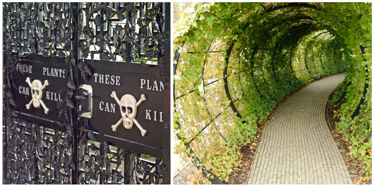 The Alnwick Poison Garden Is The Most Dangerous Garden In The World Poison Garden Alnwick Castle Garden Landscape Design
