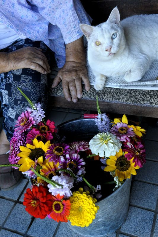 Heartwarming Friendship Between a Grandmother and Her Cat Will Make Your Day