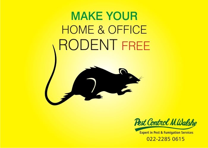 Safeguard Your House And Your Offices Against Rodents Fumigation Services Pest Control Services Pest Control