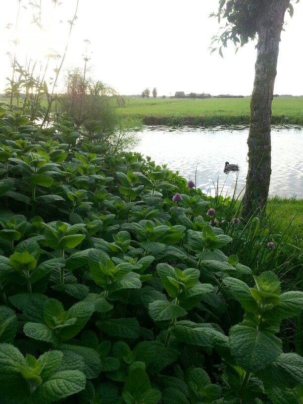 Langs de Meije- Holland