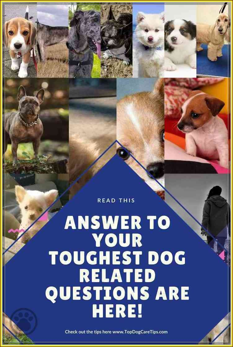 Stop The Headaches Learn More About Dog Care Dog Training Dog