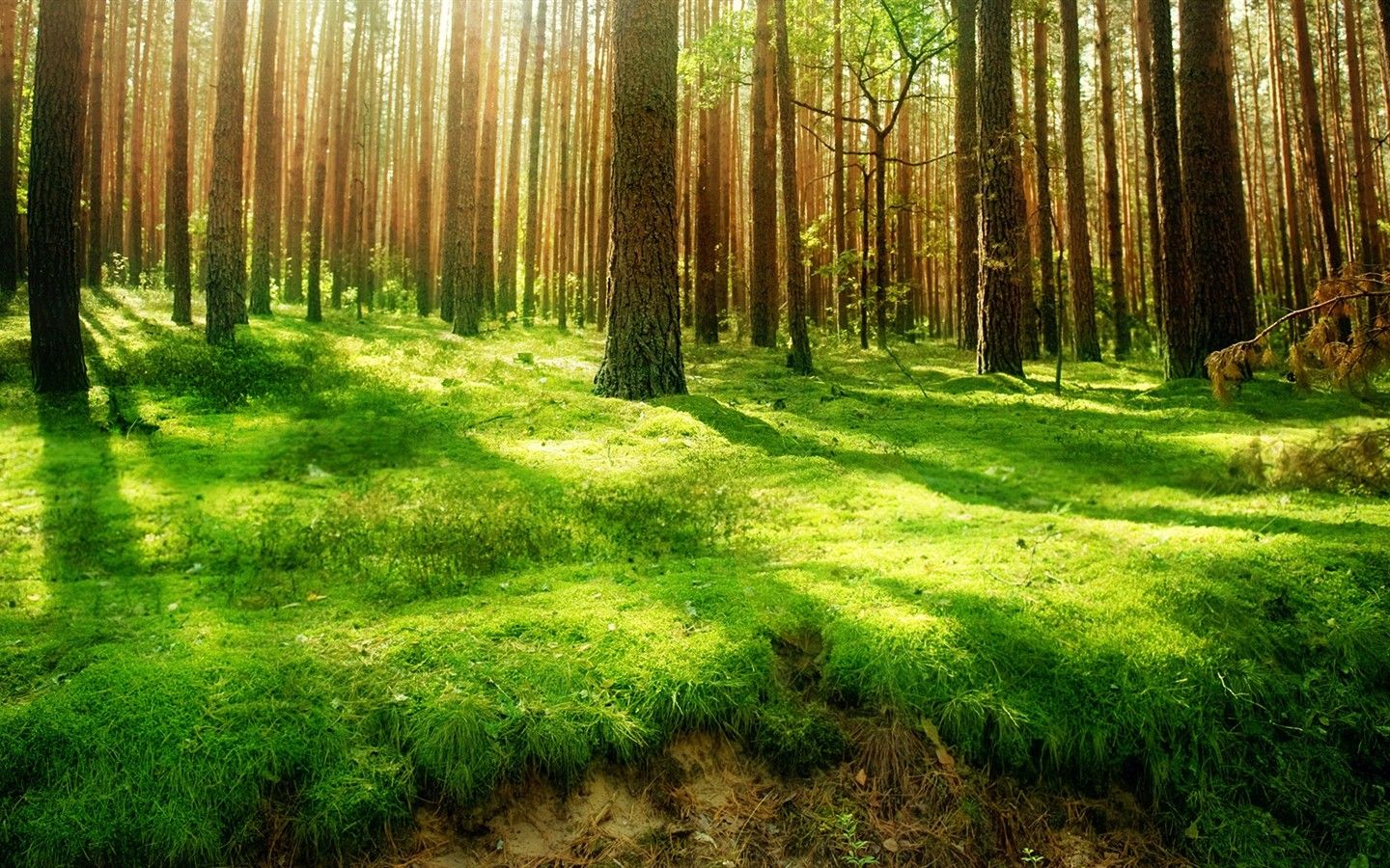 Forest Forest Scenery Scenery Wallpaper Beautiful Forest