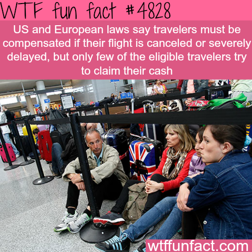 If your flight is severely delayed or canceled, you are eligible for compensation - WTF fun facts