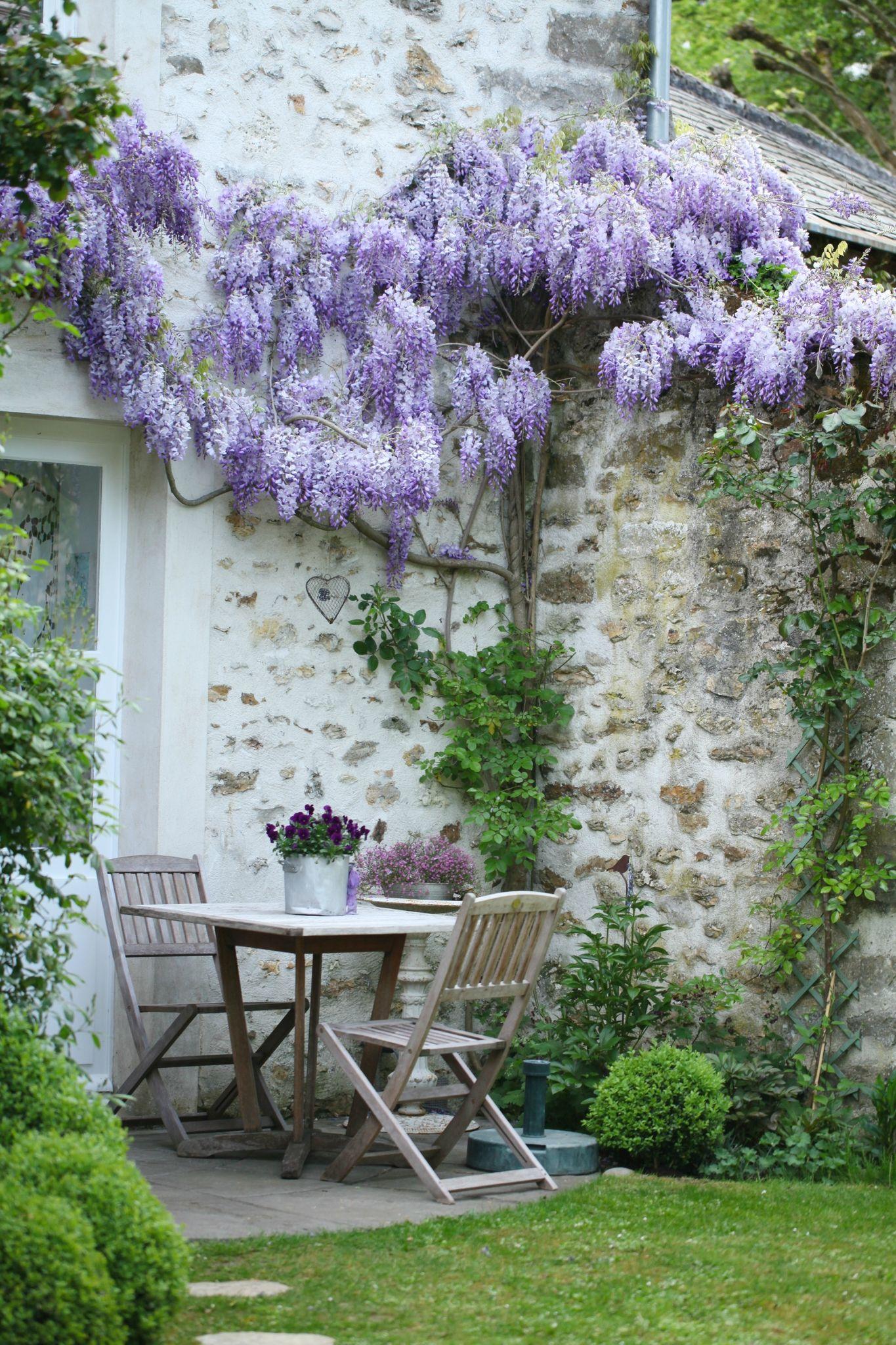 Une Glycine En Pot un tour au jardin  - grange de charme   garden   jardins