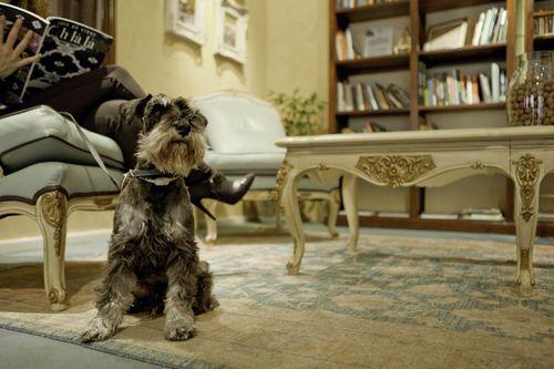 Gran Hotel Conde Duque Pet Friendly Madrid