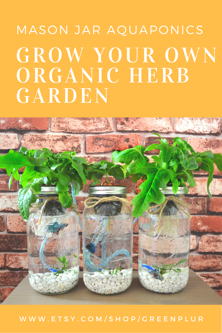 Organic Indoor Herb Garden Kit 3 mason jar aquaponics kit build your own hydroponics herb garden 3 mason jar aquaponic organic herb garden kit salad kit hydroponics sustainable workwithnaturefo